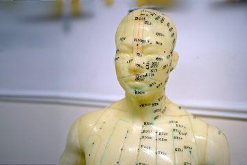 Acupuncture diagram model
